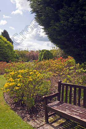 Aberdeen Hazlehead Park Xvv0383jhp Hazlehead Azalea Border Seat Rest Path  Summer Scotland Aberdeen Flower Displays Photographed