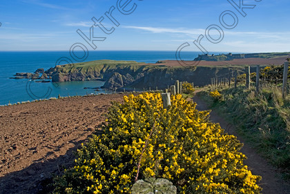 Clifftop Walk UP220157JHP 