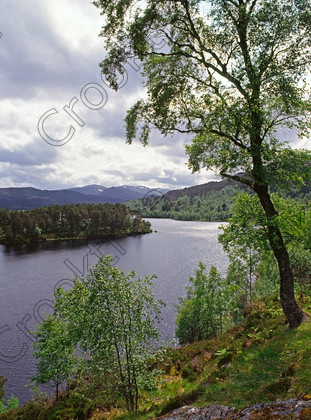 Glen Affric 126710JHP 