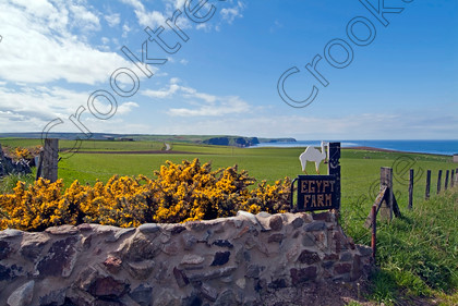 Egypt Farm Rosehearty TO19009JHP 