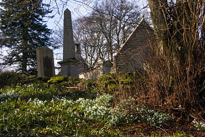 Auchindoir Snowdrops vq8042jhp 